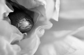 """""""Hidden"""" by Rachel Pasch Grossman"""