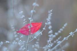 """""""Silver and Red"""" by Rachel Pasch Grossman"""