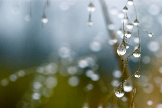 """""""Some Raindrops You Remember, Others Become a Blur"""" by Rachel Pasch Grossman"""