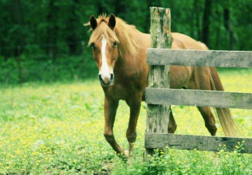 """Wonderhorse"""