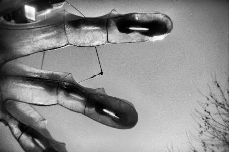 """Fingers"" via morgueFile"